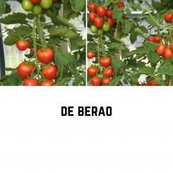 De Berao Tomatensamen (Salattomate)