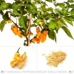 Devil's Tongue Yellow Chili Seeds