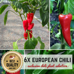 EUROPEAN CHILIES Organic Plants-Power-Pack