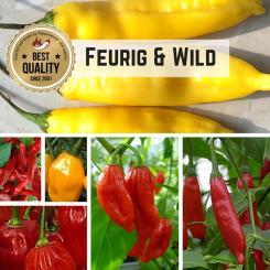 Seed Assortment 'Hot & Wild'
