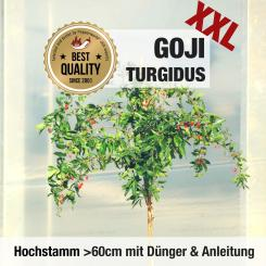 Goji Berry plant Turgidus HIGH STEM 1x cultivation set