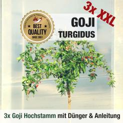 Goji Berry plant Turgidus HIGH STEM 3x cultivation set