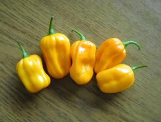 Habanero Franzisca Chilli Seeds