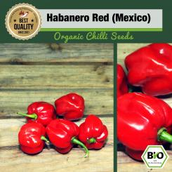 Organic Habanero Red (Mexico) Chilli Seeds