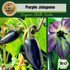 Organic Purple Jalapeno Chilli Seeds  - First Try Then Buy