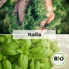 Italia - Kräuter Saat Sortiment