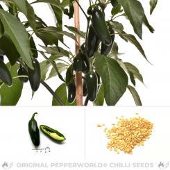 Jalapeno Barajas Chili Seeds