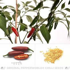 Jalapeno Ciclon Chilisamen