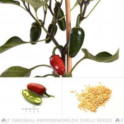 Jalapeno El Rey Chili Seeds