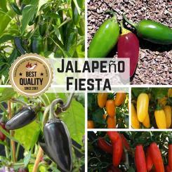 Seed Assortment 'Jalapeno Fiesta'