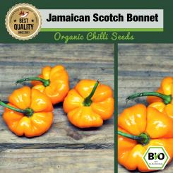 Organic Jamaican Scotch Bonnet Chilli Seeds