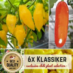 Classic Organic Plants-Power-Pack