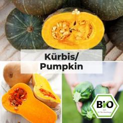 Kürbis - Gemüse Saat Sortiment