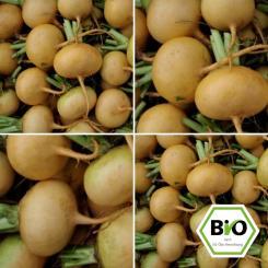 Petrowski Turnip seeds