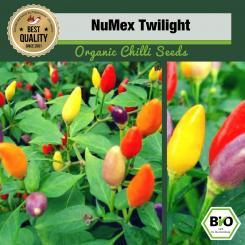 Organic NuMex Twilight Chilli Seeds