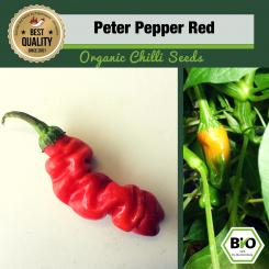 Organic Peter Pepper Red Chilli Seeds