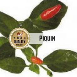 Piquin Chilisamen