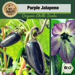 Organic Purple Jalapeno Chilli Seeds