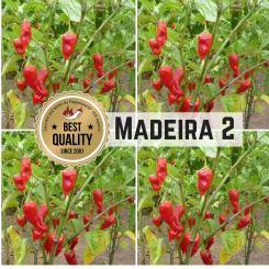 Madeira #2 Chilli Seeds