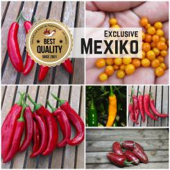 Seed Assortment 'Mexican Fire'