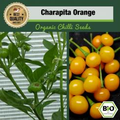 BIO Charapita Orange Chilisamen