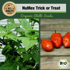 Organic NuMex Trick or Treat Chilli Seeds