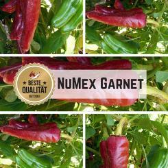NuMex Garnet Chilisamen