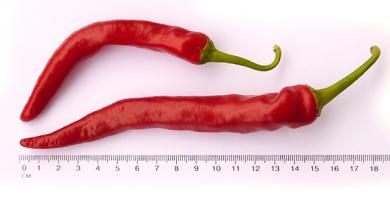 NuMex Las Cruces Cayenne Chilli Seeds