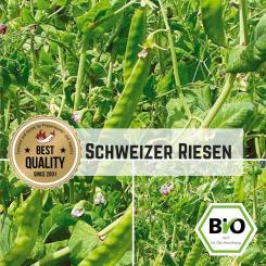 Zuckererbse Schweizer Riesen Samen