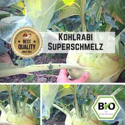 Kohlrabi Superschmelz Samen