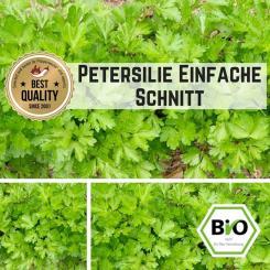 Petersilie (Einfache Schnitt) Samen