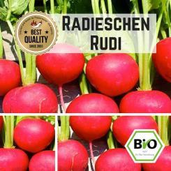 Radieschen (Rudi) Samen