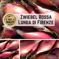 Zwiebel (Rossa Lunga di Firenze) Samen