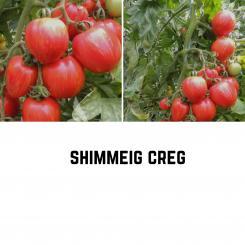Shimmeig Creg Tomatensamen (Salattomate)