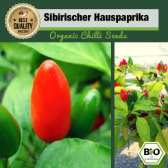 Organic Siberian House Pepper Chilli Seeds - First Try Then Buy