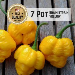 Seven Pot / 7 Pot Brain Strain Yellow Chilli Seeds