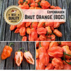 Bhut Orange Copenhagen (BOC) Chilli Seeds