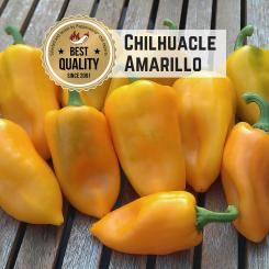 Chilhuacle Amarillo Chilisamen