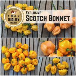 Scotch Bonnet Exclusive - Seed Special 2020