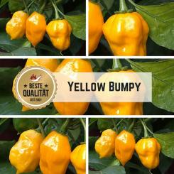 Yellow Bumpy Chilli Seeds