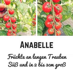 Anabelle Tomato seeds (Cocktailtomatoes)