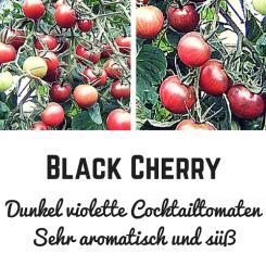 Black Cherry Tomatensamen (Cocktailtomate)