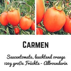 Carmen Tomatensamen (Saucentomate)