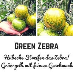 Green Zebra Tomatensamen (Salattomate)