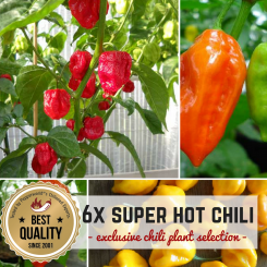 SUPER HOT CHILIES Organic Plants-Power-Pack