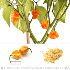 Trinidad Scorpion Butch T Yellow Chilli Seeds