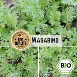 Wasabino Samen