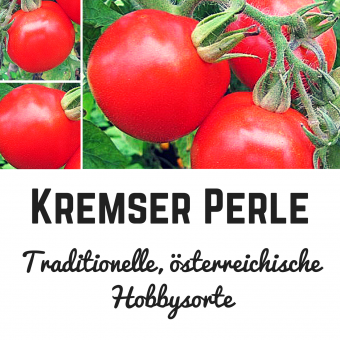 Kremser Perle Tomatensamen (Salattomate)