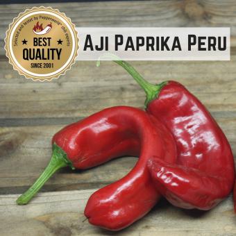 Aji Paprika Peru BIO Chilipflanze