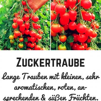 Zuckertraube Tomatensamen (Cocktailtomate)